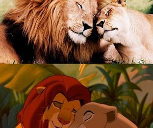 lion, lion king, and animal image