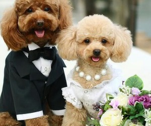 dogs, cute, and wedding image