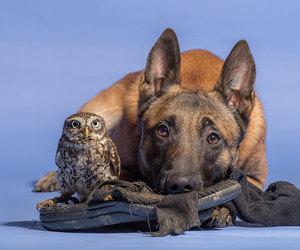 animal, owl, and dog image