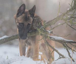 owl, dog, and animals image