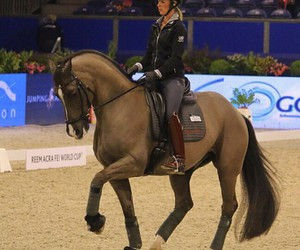 dressage, horses, and valegro image