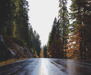 road, autumn, and trees image