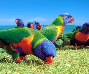 bird, parrot, and rainbow image