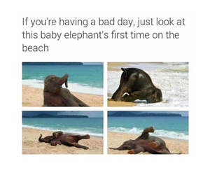 elephant, cute, and beach image