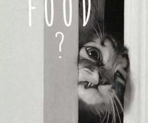 animal, cat, and food image