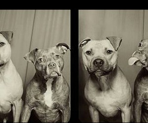dogs, friendly, and smiley image