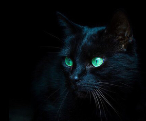 black, turquoise, and cat image