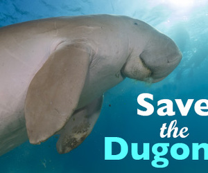 dugong image