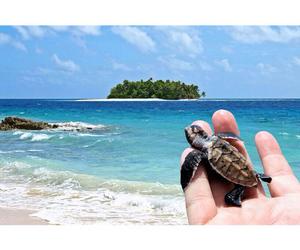 turtle image
