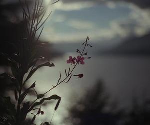 beautiful, dark, and nature image
