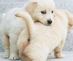 animal, puppy, and dogs image
