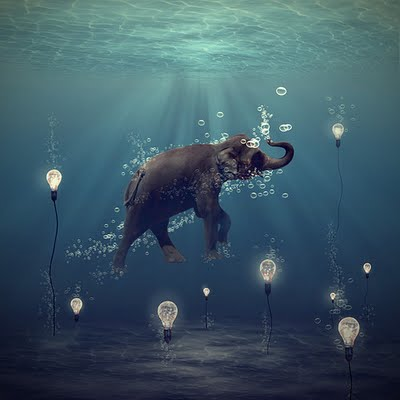 elephant and water image