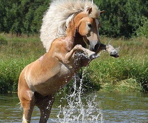 beautiful, funny, and horse image
