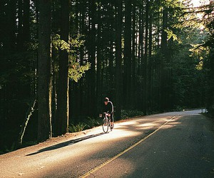 nature, forest, and bike image
