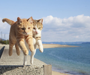 cat, jump, and sea image