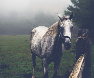 alone, animal, and foggy image