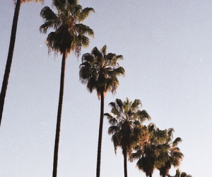 los angeles and palm trees image