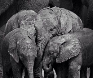 animal, elephant, and family image