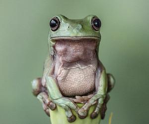 frog, green, and animal image
