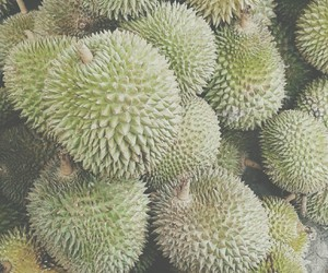 durian and indonesia image