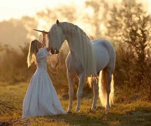 horse, animals, and unicorn image