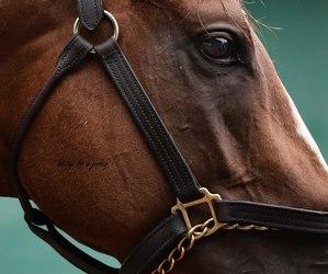 animal, horse riding, and luxury image