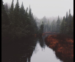fog, foggy, and forest image