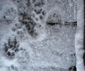 cats, cold, and paw image