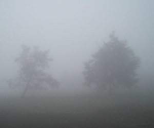pale, grunge, and tree image