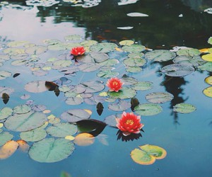 lake, nature, and lilypads image