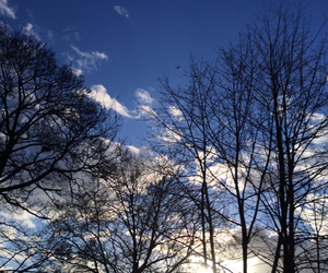 clouds, day, and trees image