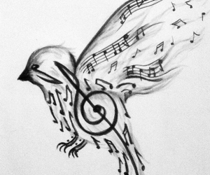 music, bird, and drawing image