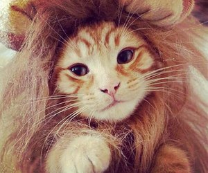 cat, lion, and cute image