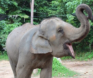 animal, elephant, and tropical image