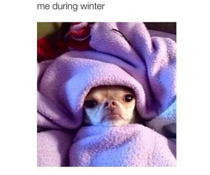 winter, funny, and cold image