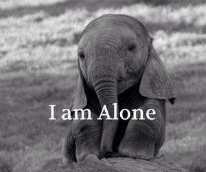 alone, elephant, and sad image