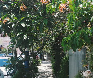 flowers, street, and sunny day image