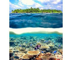 fish, water, and beach image