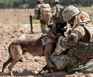 dog, support, and military image