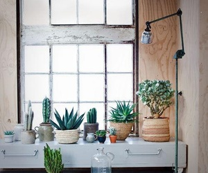 plants, cactus, and interior image
