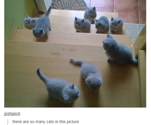 tumblr, cat, and funny image