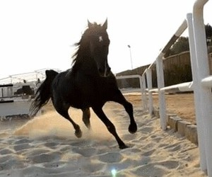 horse, black, and gif image