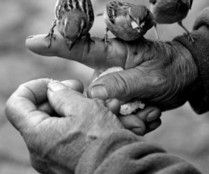 bird, black and white, and hands image
