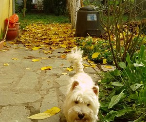 dog, garden, and nature image