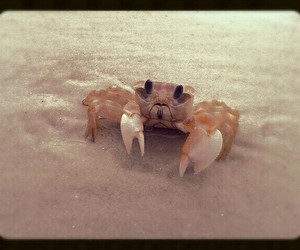 beach, crab, and funny image