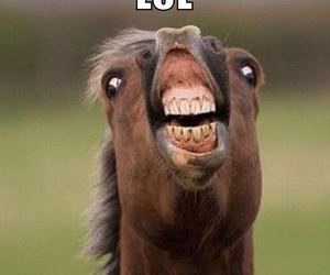 lol, horse, and funny image