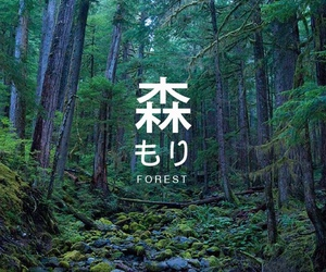 forest, japanese, and green image