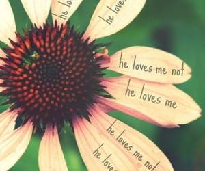 love, flowers, and he image