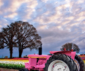 pink, flowers, and tractor image