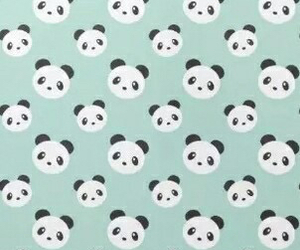 panda and wallpaper image